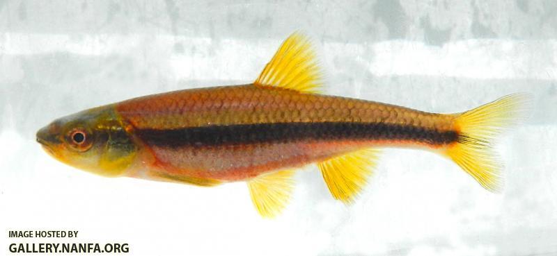 yellowfin1.JPG