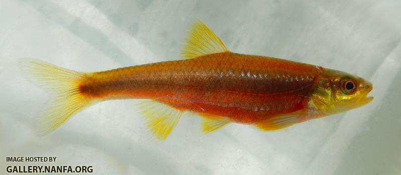 yellowfin2.JPG