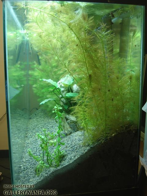 55 gallon tank side view