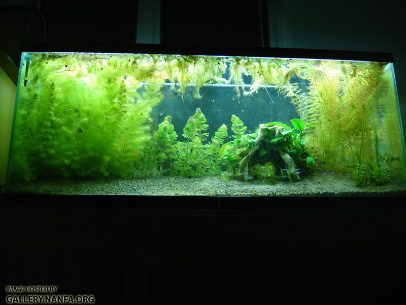 Photo of 55 gallon tank March 1st 2011