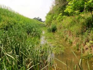 Bateson Ditch