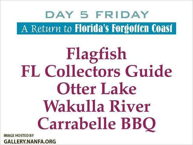 Florida's Forgotten Coast   Day 5