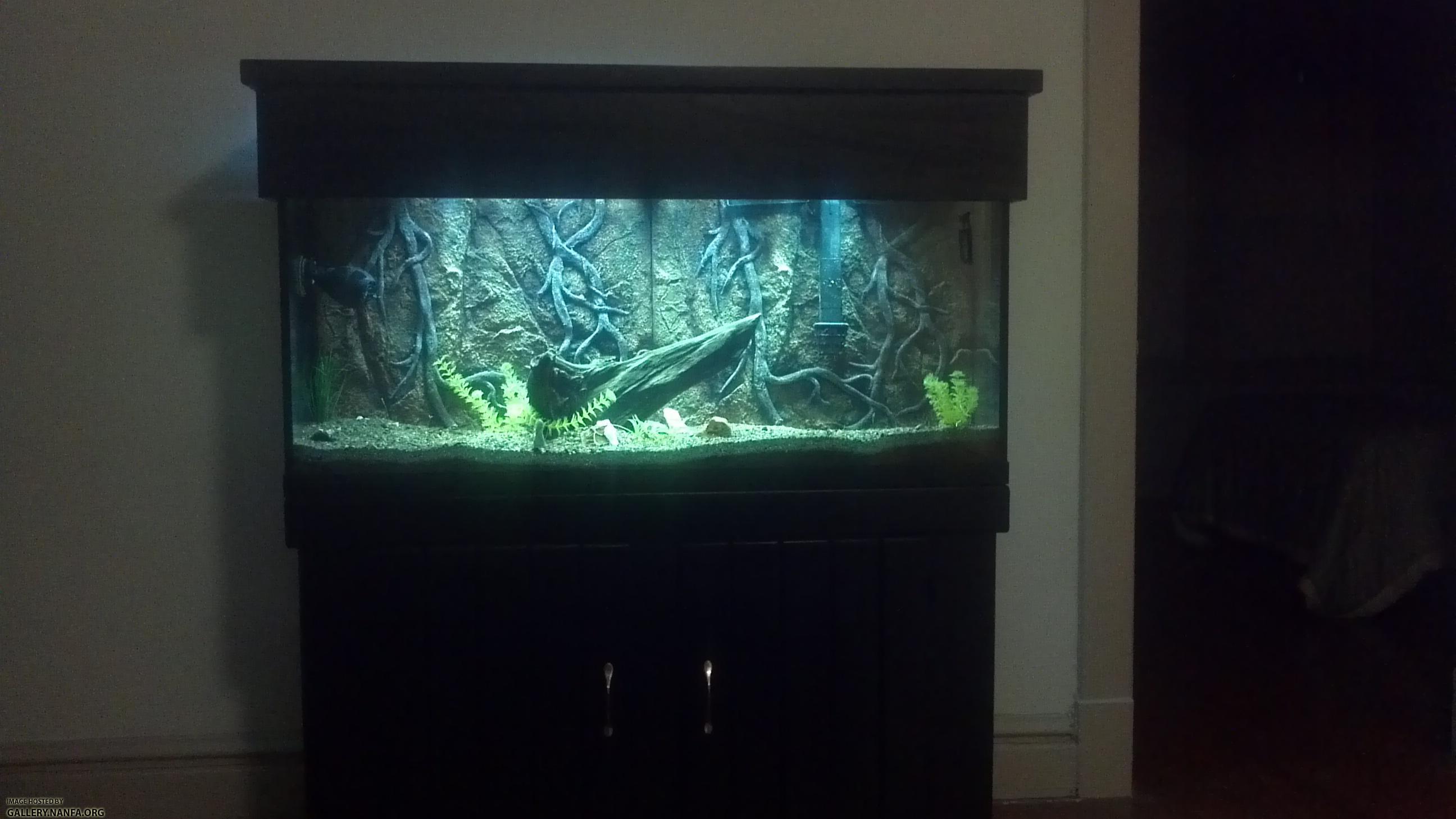 55 gallon river setup 2 for 55 gallon fish tank setup
