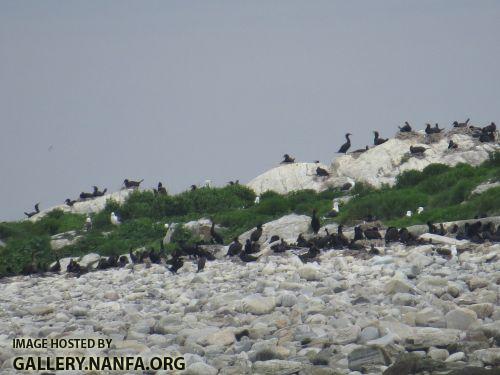 seabirds+2.jpg