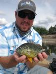 Pumpkinseed X Green Sunfish Hybrid