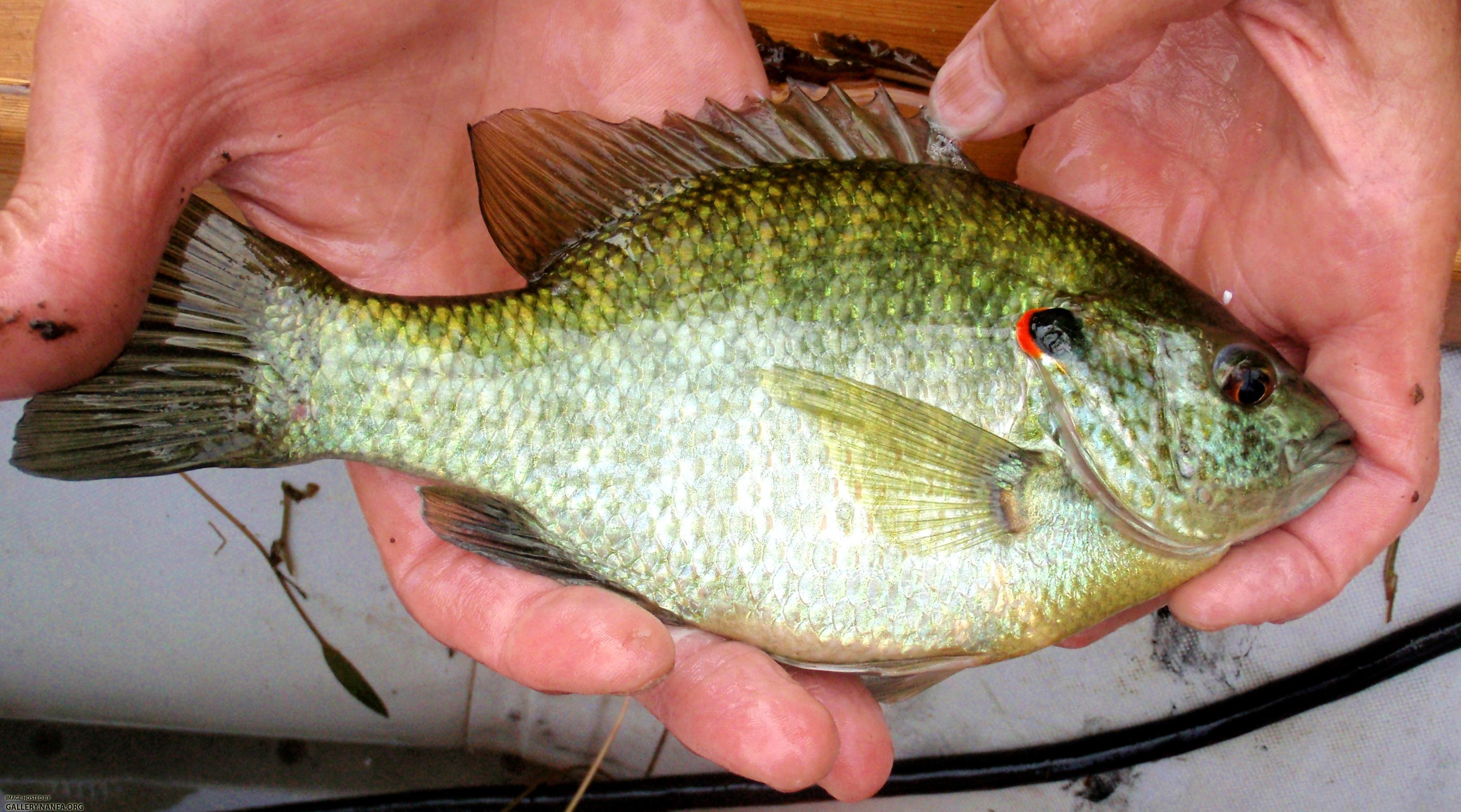 SCDNR  Fish Species  Freshwater  South Carolina